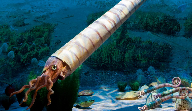 ortoceratiter och trilobiter